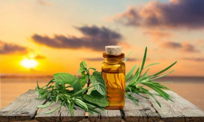 Where to Buy Tea Tree Oil