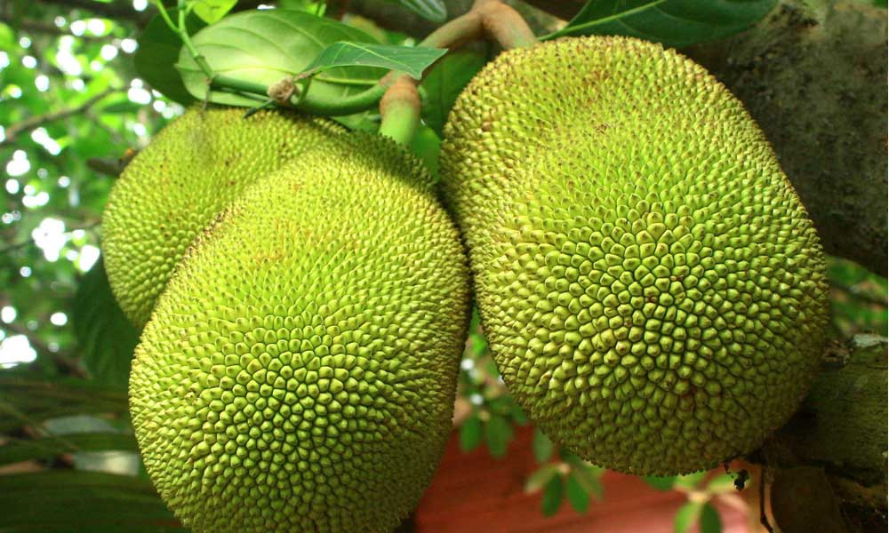 Where to Buy Jackfruit