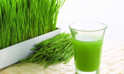 Where to Buy Wheatgrass