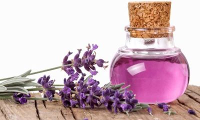 Where to Buy Lavender Oil