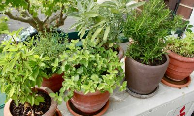 Where to Buy Plants