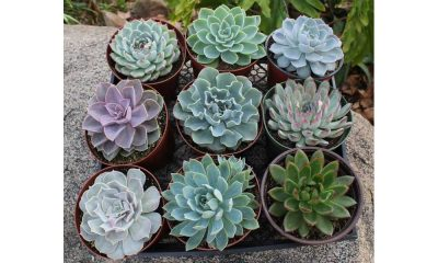 Where to Buy Succulents