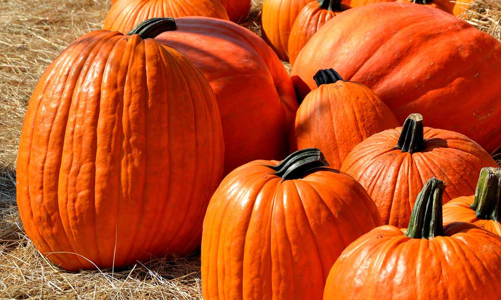 Where to Buy Pumpkins