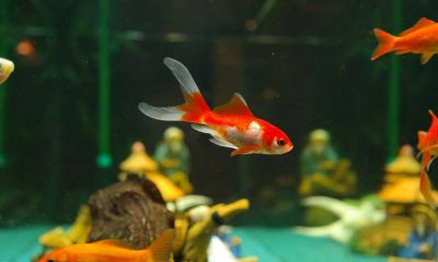 Where to Buy Pet Fish